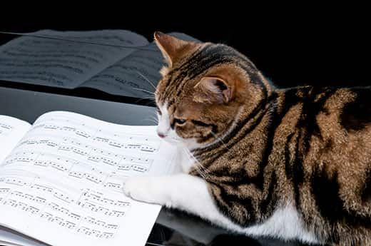 Cat on piano laying next to sheet music.