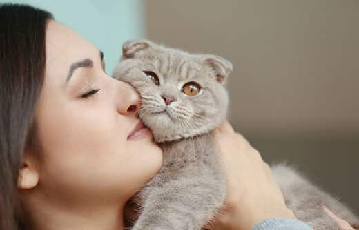 Woman holds gray Scottish fold cat against her face in a snuggling action.
