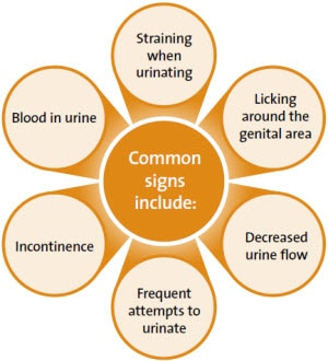 Common signs