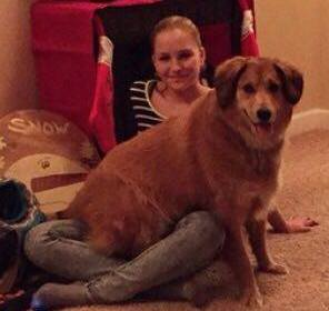 Brown dog sits on a lady's lap sitting on the floor.
