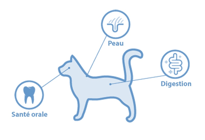 location of microbiomes on cat