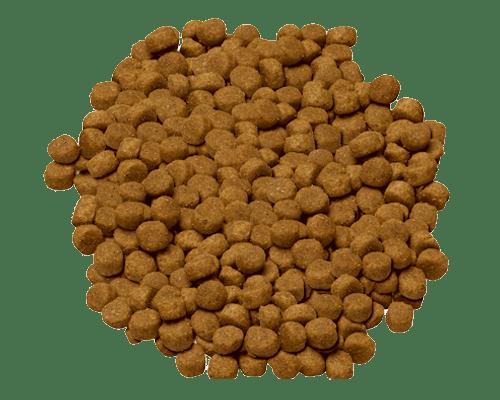 science diet advanced fitness dog food